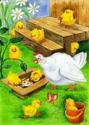 Із життя у курнику