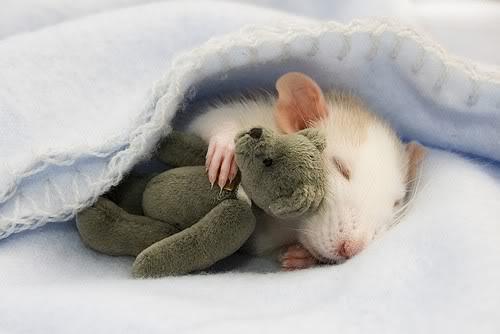 Сон Мишки