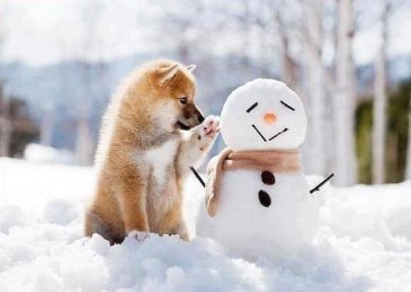 Перший сніг у Відні…