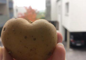 Картопляне серце, картопляні груди або моя міні колекція овочевих знахідок :)