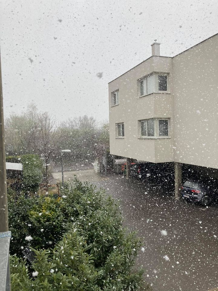 погода у Відні, капризи весни, весна у Відні, сніг, сніжить, сніг у квітні, весна, сніжинки, віденські будні